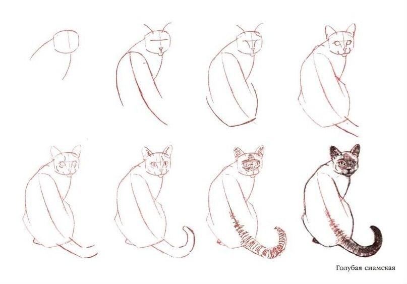 Как нарисовать кошку видео карандашом поэтапно для