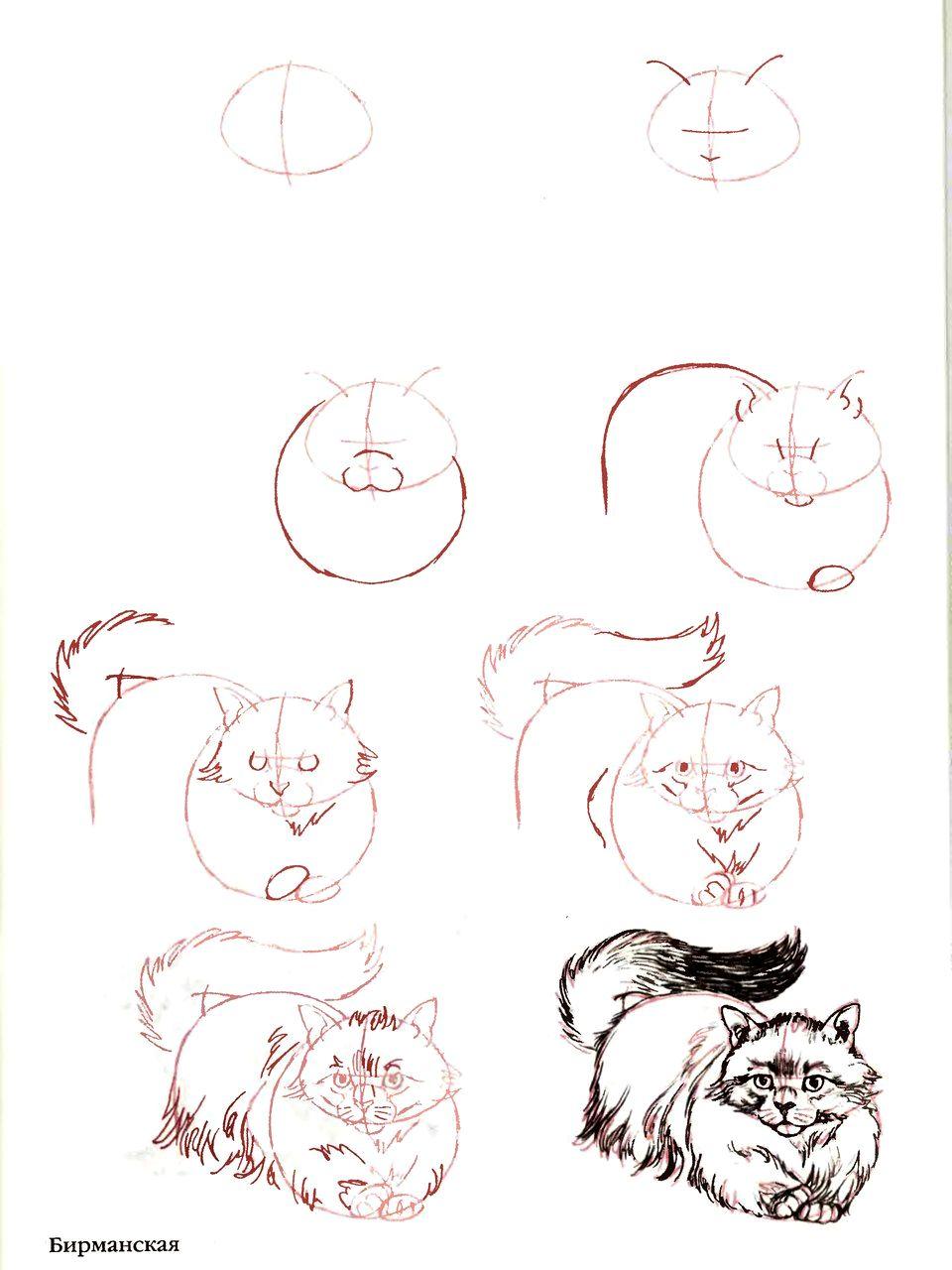 Как нарисовать кошку своими руками 64