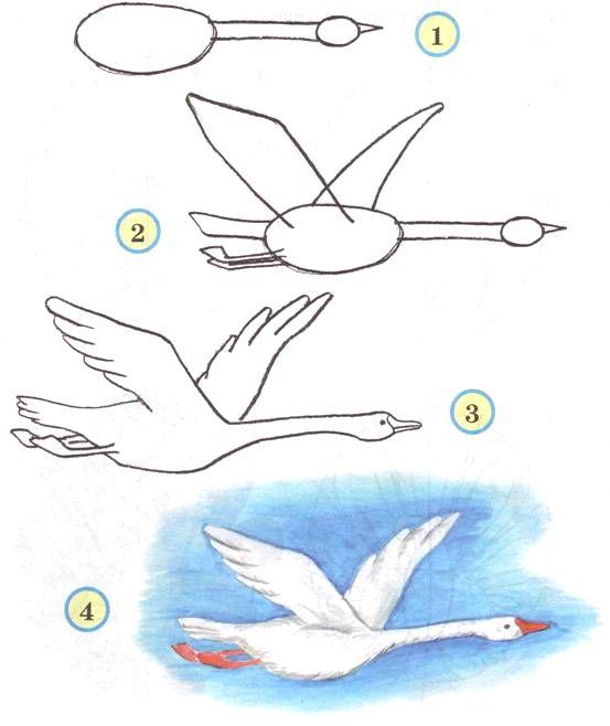Поэтапное рисование птицы с детьми
